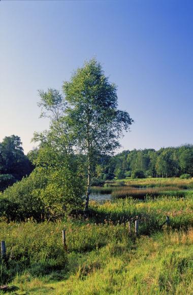 De danske naturområdet i Danmark er trængte på grund af landbruget. Hver tredje dansk plante- og dyreart er truet, vurderer biologer.