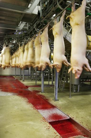 Landbruget producerer svin i lange baner, men landbrugseksporten er ikke helt så stor, som Landbrug & Fødevarer påstår.