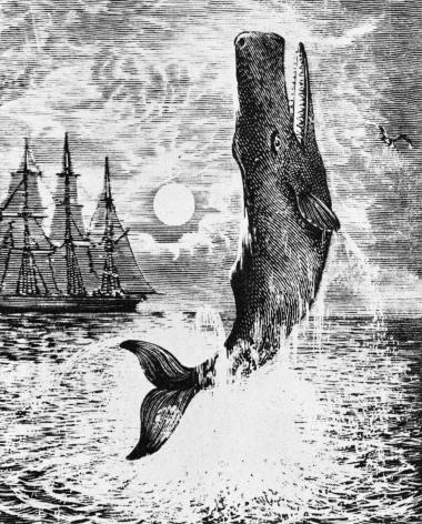 Melvilles hovedværk, det oceaniske drama om kaptajn Ahabs sindsformørkede hævntogt mod den hvide hval Moby Dick, blev i første omgang misforstået og underkendt i Amerika. Den umiddelbart følgende – hidtil ikke oversatte – 'White Jackett' gjorde dengang større indtryk.Illustration fra Moby Dick
