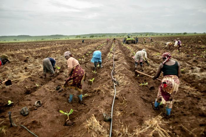 landbrug i afrika