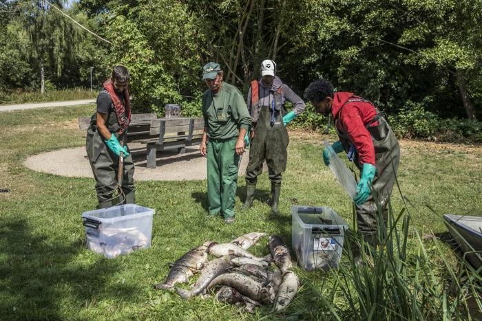5622d696 Kun døde fisk flyder med strømmen: I sommer var der temmelig mange af dem på