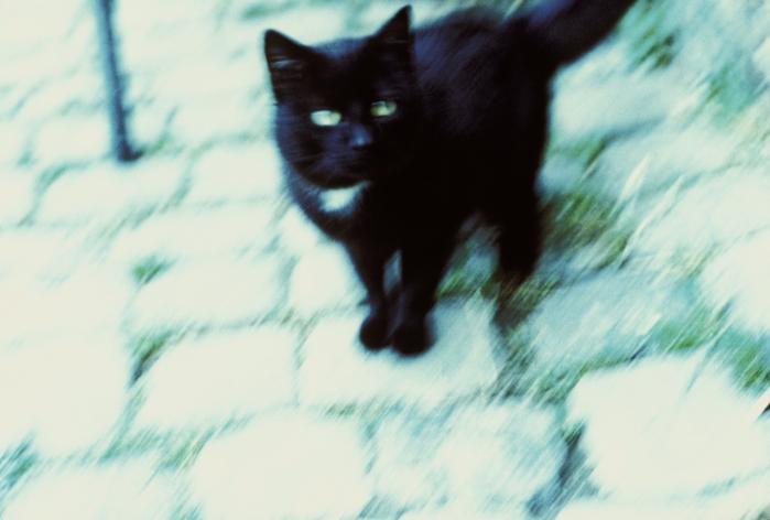 Djævleskikkelse. Katten Behemot optræder som mere end bare et husdyr i Bulgakovs roman, hvor den vokser i størrelse, går på bagbenene og bruger sine poter som var det menneskefingre.