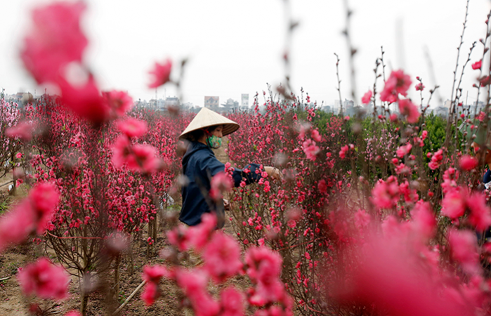Siden 2011 har de vietnamesiske myndigheder beslaglagt 112 billioner dong – omkring 30 milliarder kroner – og inddraget mere end 18.700 hektar ulovligt eksproprieret jord. Lasse Jensen beretter fra landet, her 40 år efter Vietnamkrigens afslutning