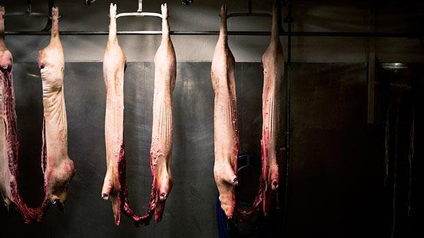 Om 20 år vil de fremtidige generationer kigge tilbage på os med vantro og undren sig over, hvorfor vi spiste kød i så enorme mængder