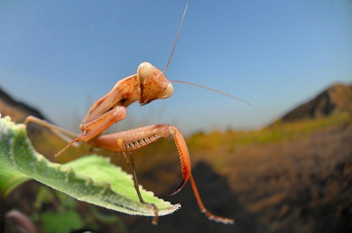 Hvis insekter har subjektive erfaringer, vil der findes langt mere bevidsthed i verden, end vi havde forestillet os – ifølge et estimat fra Smithsonian Institution er der til stadighed godt ti trillioner (10.000.000.000.000.000.000) individuelle insekter i live.