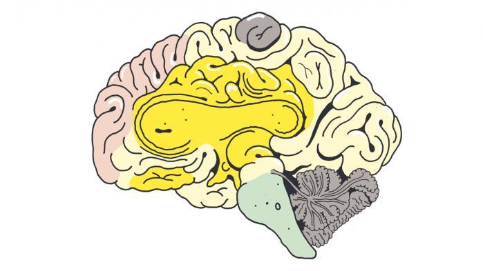 Tag på rejse gennem hjernefolder og frontallapper og se, hvad der sker i hjernen, når vi hører musik