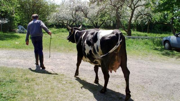 Hvis det fortsætter som hidtil, vil der i 2022 være ét dansk landbrug tilbage | Information
