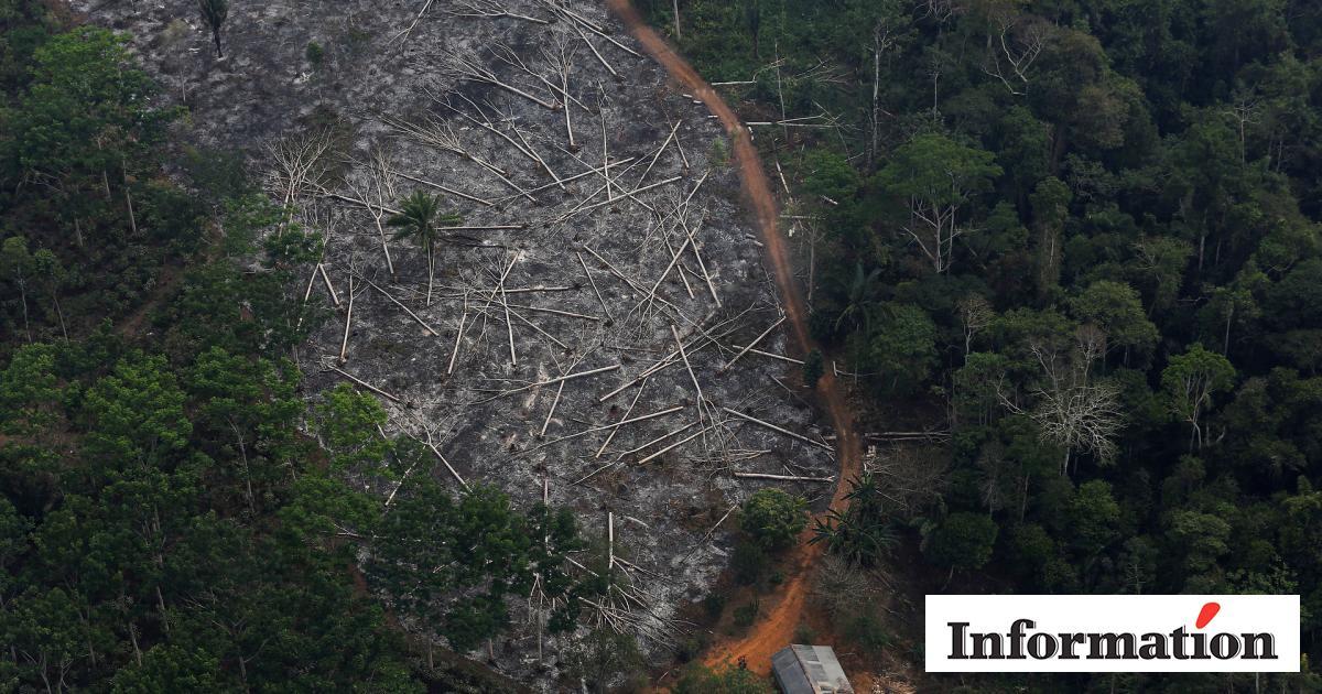Tre Fodboldbaner Ryddes Hvert Minut Faeldningen Af Amazonas