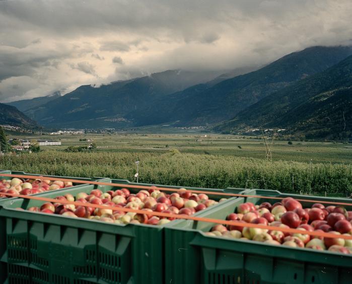 I årtier har Vinschgau-dalen i den norditalienske provins Sydtyrol været domineret af æbleindustrien, som bruger store mængder pesticider. Men i september i år stemte et overvældende flertal af borgerne i Mals kommune for et forbud mod brugen af pesticider i deres kommune