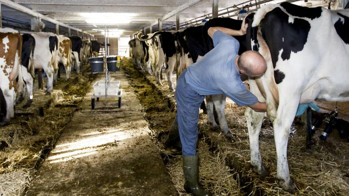 I eksempelvis Kina er man villig til at betale meget for økologisk mælk. Og nu vil fødevareministeren blandt andet styrke eksporten af økologiske varer, fordi det ikke går hurtigt nok med økologien i forhold til målsætningerne