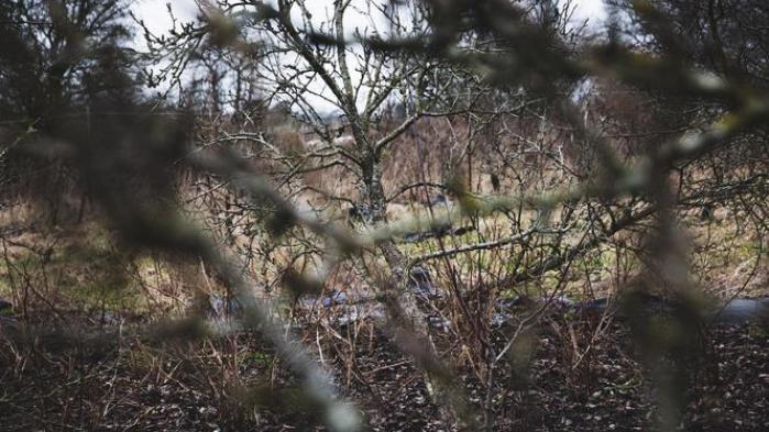 Skovhave opbygget efter permakulturprincipper, der bruges vedskovlandbrugetSvanholm ved Frederikssund.