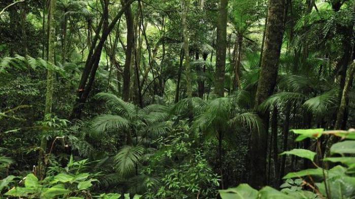 Mennesket har givet sig selv rettigheden til at eje og udnytte naturen, som ikke har noget at skulle have sagt – bortset fra i Sydamerika