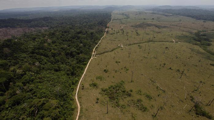 Efter at skovrydningen i Sydamerika er aftaget år for, er udviklingen nu vendt, så der de seneste år er blevet fældet mere skov.