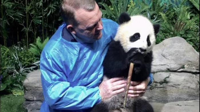 De samlede danske pandaomkostninger ventes at løbe op i en kvart milliard kroner: Pandaerne æder hver 30 kilo bambus om dagen, som en sjællandsk landmand er blevet sat til at producere. Zoo skal bygge en ny 'tågeskov', som Bjarke Ingels står bag. Og Beijing skal have en årlig pandaleje på en million dollar