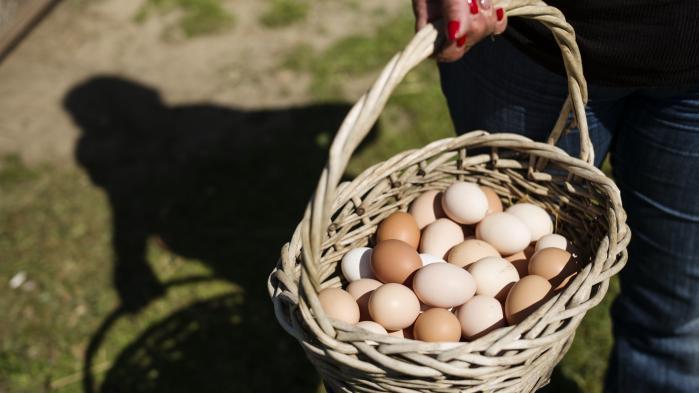 Nu kan danskerne via en ny fond investere i økologiske landbrug i Danmark.