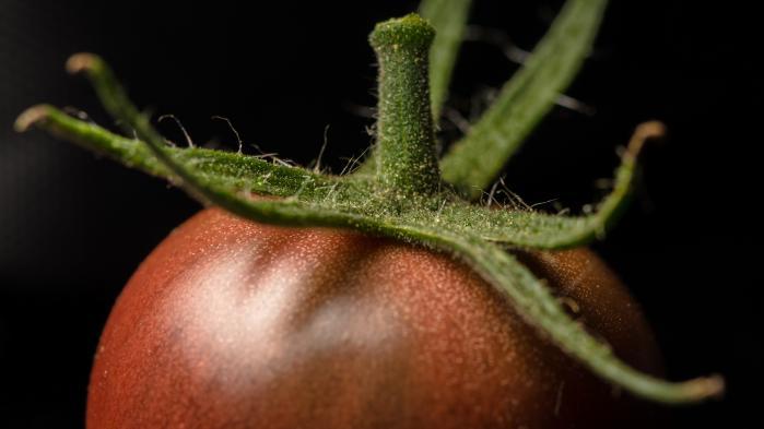 Den bioteknologiske udvikling går rasende stærkt, og forskere forbedrer naturens planter, så de kan klare tørke, indeholde flere vitaminer og smage bedre. Grænserne for patenter på planter rykker sig hastigt, og i disse dage kan en afgørende beslutning på området være på vej