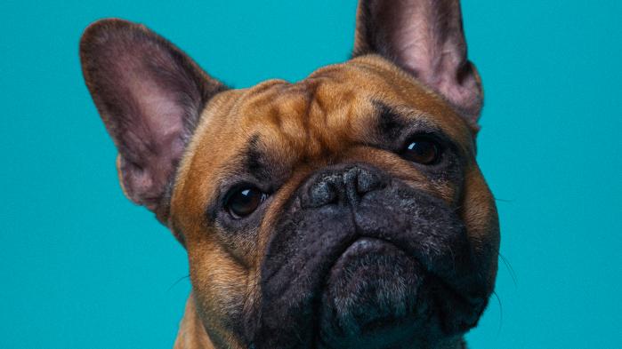 Journalist Jon Faber havde aldrig set sin far græde. Men så døde hans hund. Kæledyr kan få træmænd til at fælde tårer og danskerne til at bruge enorme summer. Begejstringen har nået nye højder under coronakrisen, hvor der meldes om massekøb af hunde og katte. Men hvorfor vækker de pelsede væsener så stærke følelser i os?