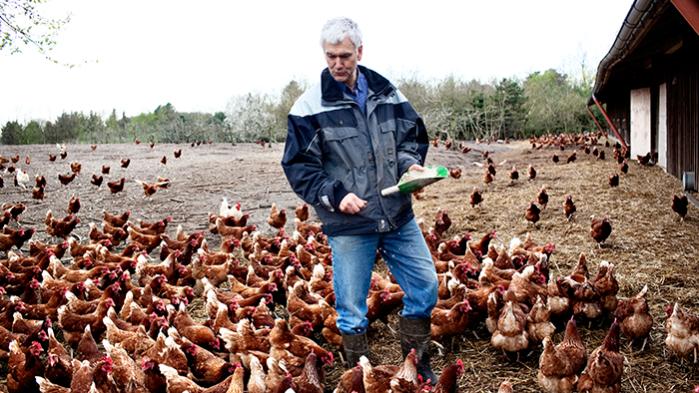 Selv om økologisk landbrug er blevet udråbt til en af de farbare veje frem for dansk landbrug, lægger regeringen nu op til at spare millioner på området. Her er vi på Stengården, der er et økologisk familielandbrug i Nordsjælland