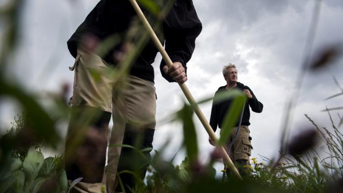 De danske forbrugere vil gerne tættere på fødevareproduktionen og interesserer sig langt mere for det, de putter i munden, end tidligere. Det er der en række eksempler på landet over – eksempelvis her på Knivholt i Nordjylland, hvor man producerer gammeldags kåltyper.
