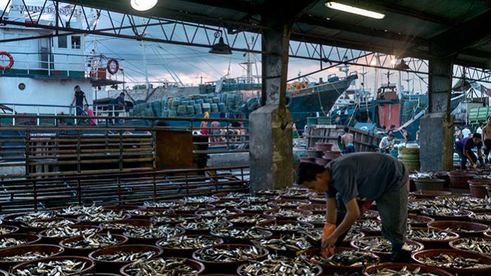 Fiskemarked i havnebyenNavotas, der ligger nord for Manila på Filippinerne. Ny rapport fra Verdensbanken anbefaler nu, at der bliver skåret ned i antallet af fiskere, fordi overfiskeri bliver stadig mere udtalt på globalt plan