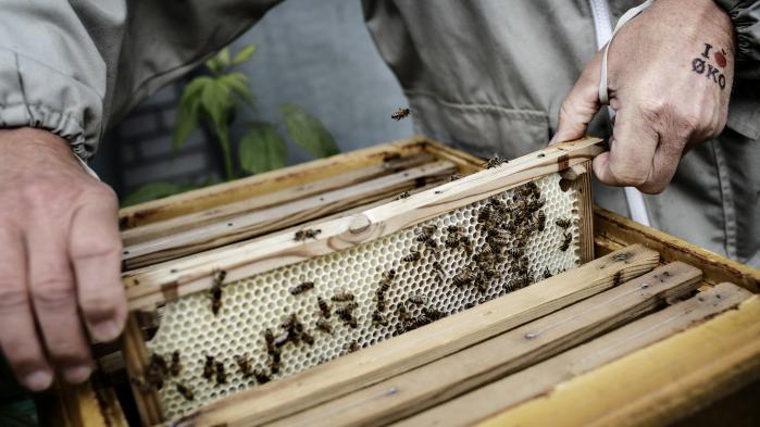 Det er nemt og sjovt at give bierne bedre levevilkår. Og det er nødvendigt. For de dør stadigt hurtigere