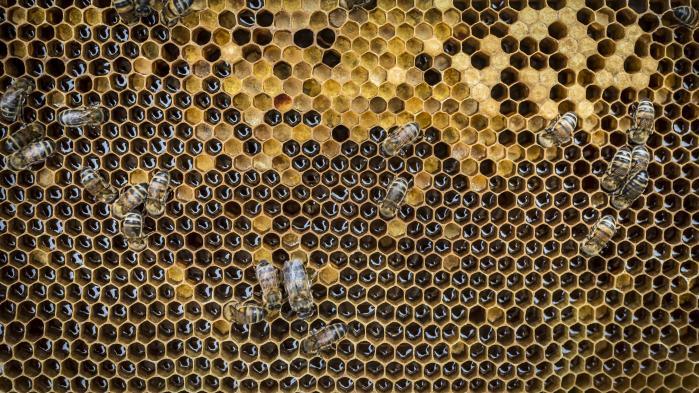 En stor hollandsk undersøgelse har påvist en entydig sammenhæng mellem fald i fuglebestanden og afgrøder, der er behandlet med nikotinoider.