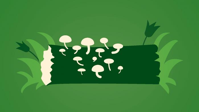 Professor Per Gundersen fra Københavns Universitet redder lidt af klimaet fra sin baghave. Her er han ladet træer og buske vokse vildt, og det binder både CO2 og giver plads til flere dyr og planter. I denne uges afsnit af Informations klimapodcast besøger vi Per Gundersen i hans have