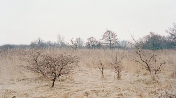 Amager Fælled er 5.000 år gammel uberørt, vild natur få kilometer fra Rådhuspladsen. Det er også en tildækket losseplads, en gammel militærplads og et frirum, som hverken er by eller land. Et sted, hvor ting har fået lov til at ske – og planter lov til at gro. Men nu kommer planerne: En udbygning af Ørestaden, en campingplads og en havnetunnel er på vej