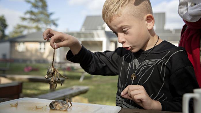 På Red Barnets sommerlejr ved Vejle Fjord får udsatte børn mulighed for at holde ferie. Med krabbefangst, kærestebreve og bare tæer ved bålet. For nogle af børnene er det deres eneste sommerferie