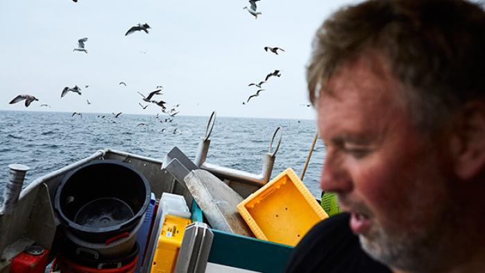 Sælen er ikke nuttet. Den er en grådig, skarptandet dræbermaskiner, der fortjener at dø. Det mener fiskerne. Antallet af sæler er eksploderet i Danmark, og fiskerne vil skyde dem, drukne dem, forgifte dem og sende en flok grønlændere efter dem …