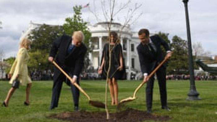 Det egetræ, som Emmanuel Macron gav Donald Trump under et besøg i 2018, findes ikke længere, fortæller franske medier. Træet blev plantet ved Det Hvide Hus og skulle symbolisere venskab mellem de to lande. Tilbage står kun en gul græsplet