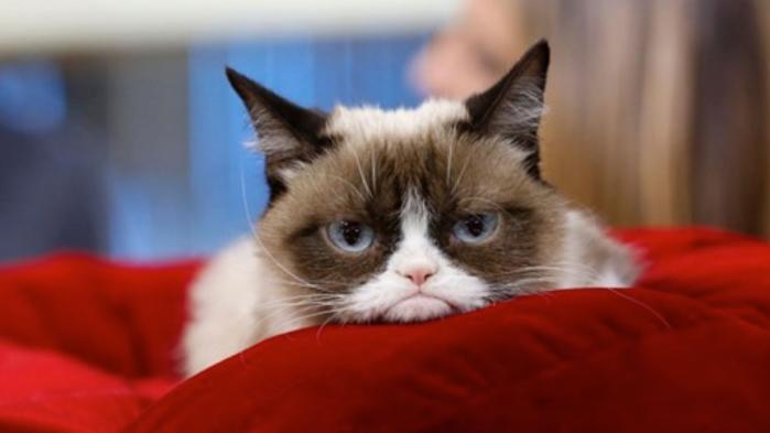 Ikke mange katte får en nekrolog i avisen, men Grumpy Cat var heller ikke en almindelig kat