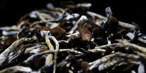 Teonanácatl – eller gudernes kød – kaldte aztekerne de psilocybinholdige svampe, som havde været brugt ved religiøse ceremonier i årtusinder. Siden Anden Verdenskrig har psilocybin mødt stigende medicinsk interesse.